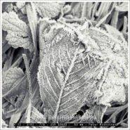 Blätter im Park mit Fujifilm XT2 – Foto des Tages
