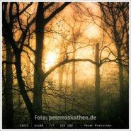 Park im Nebel – Foto des Tages – Peter Roskothen