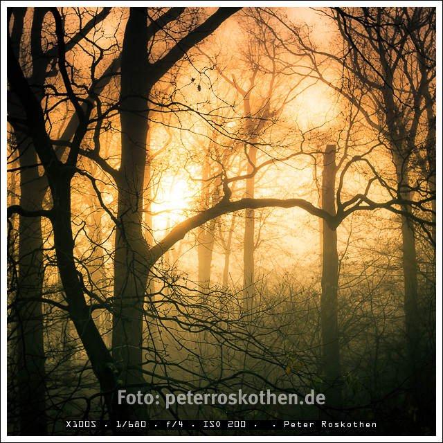 Das Foto im Grefrather Park wurde morgens belichtet. Der Nebel zwischen den Bäumen wurde gerade von der Sonne durchdrungen. Das Foto entstand mit der Fujifilm X100S und wurde in Lightroom stark weiter bearbeitet.