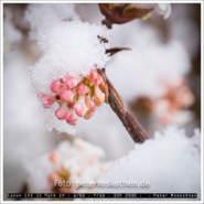 Schneeball – Foto des Tages – Peter Roskothen