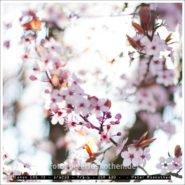 Blüte – Leichtigkeit, Schönheit, Vergänglichkeit – Foto des Tages