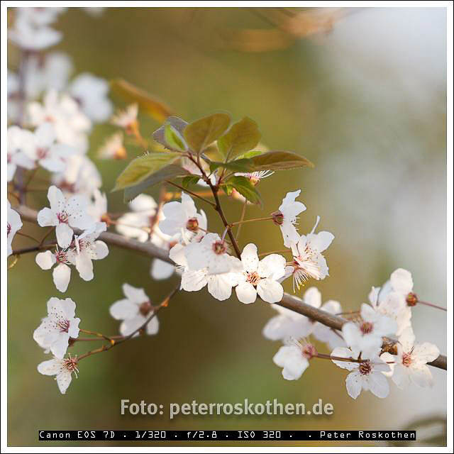 Frühlingsblüte – Foto des Tages