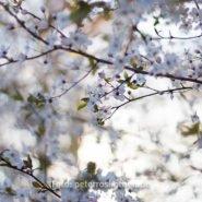 Frühlingsfoto – Foto des Tages