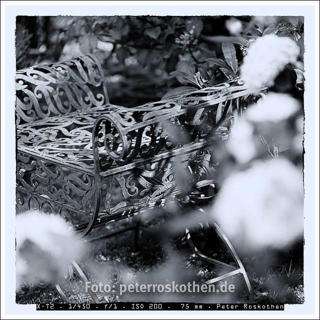 Foto des Tages – Peter Roskothen Gartenfoto Schwarzweiß - Gartenfotografie