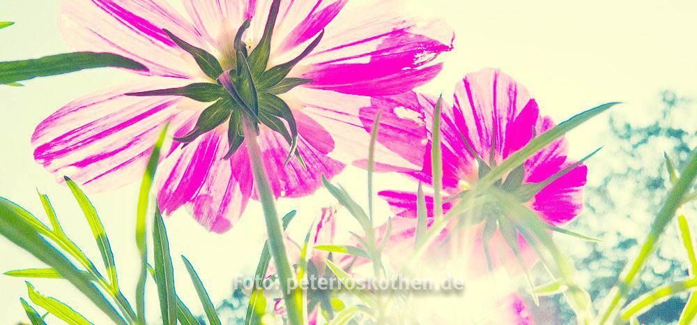 Ferienideen NRW - Fotografieren in den Sommerferien - Ideen