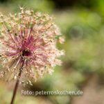 Fotokurs Kasteeltuinen - Makrofotografie lernen