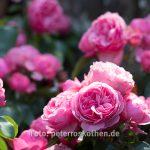 Fotokurs Kasteeltuinen - Blumenfotografie lernen