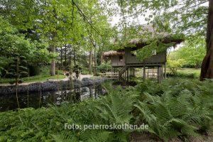 Fotoschulung Asiatischer Garten - Gartenfotografie Tipps und Tricks