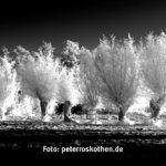 schwarzweiss fotokurs 20090109 5231 sw - Schwarzweiss Fotokurs