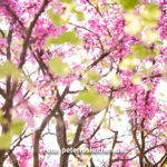 Fotoreise Meran - Fotografieren im Frühling bei der Blüte