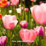 Meran im Frühling ist eine Fotoreise wert
